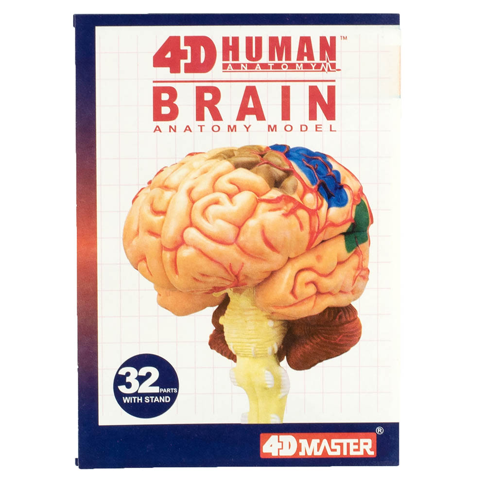 4D Human Anatomy Brain Model | TEDCO toys